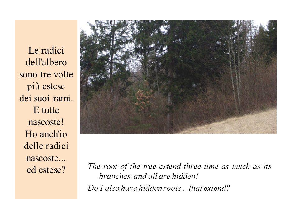 Le radici dell'albero sono tre volte più estese dei suoi rami. E tutte nascoste! Ho anch'io delle radici nascoste... ed estese? The root of the tree e