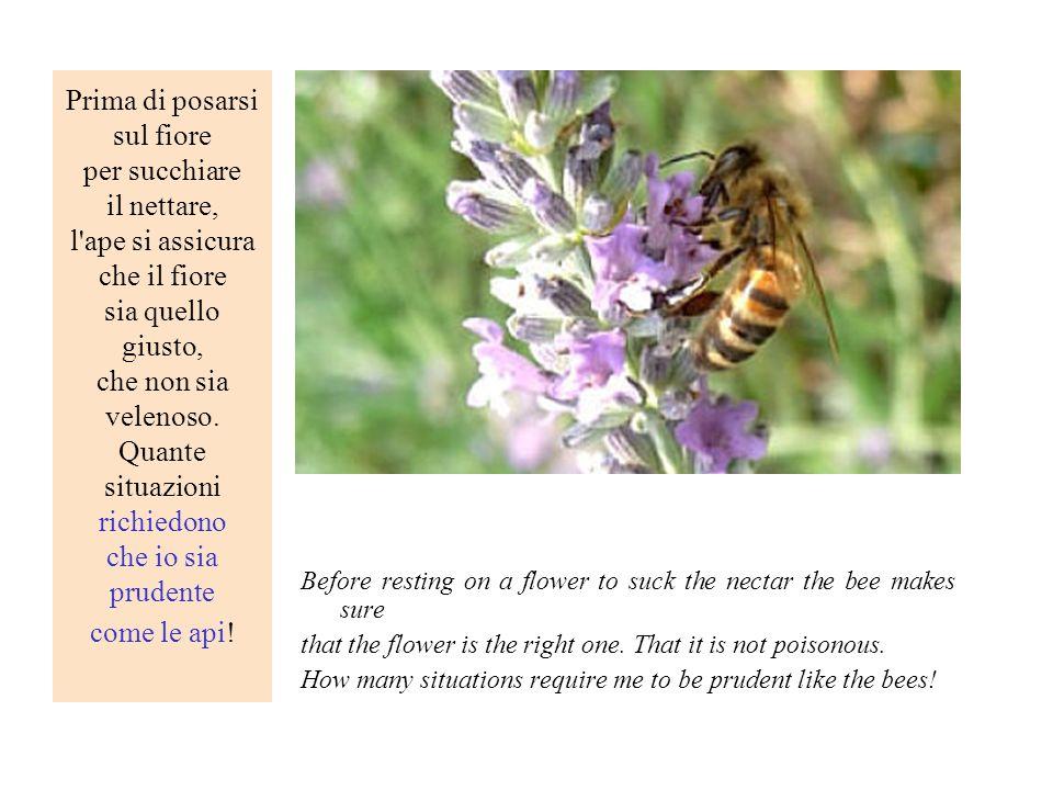 Prima di posarsi sul fiore per succhiare il nettare, l'ape si assicura che il fiore sia quello giusto, che non sia velenoso. Quante situazioni richied