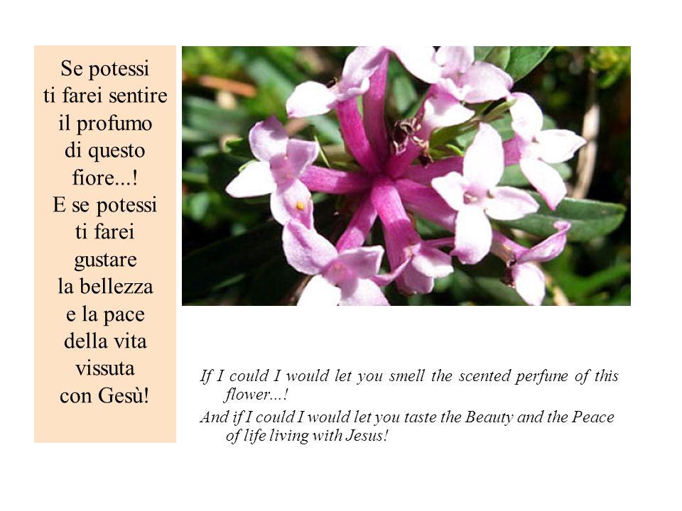 Se potessi ti farei sentire il profumo di questo fiore...! E se potessi ti farei gustare la bellezza e la pace della vita vissuta con Gesù! If I could