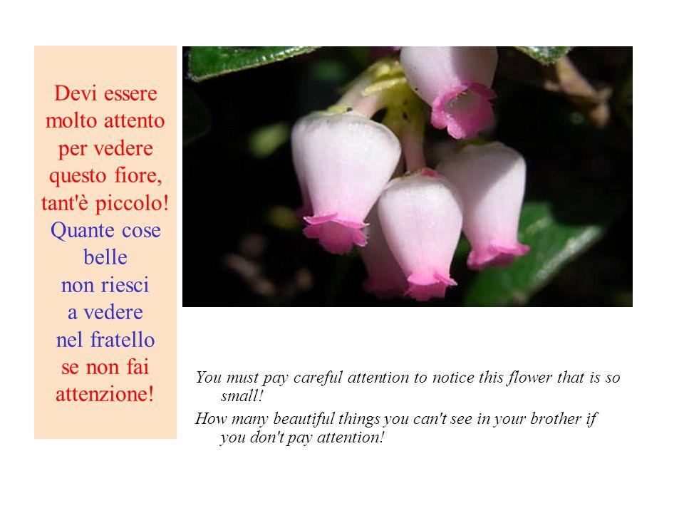 Devi essere molto attento per vedere questo fiore, tant'è piccolo! Quante cose belle non riesci a vedere nel fratello se non fai attenzione! You must