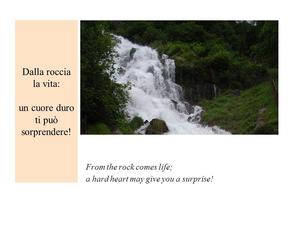 Dalla roccia la vita: un cuore duro ti può sorprendere! From the rock comes life; a hard heart may give you a surprise!