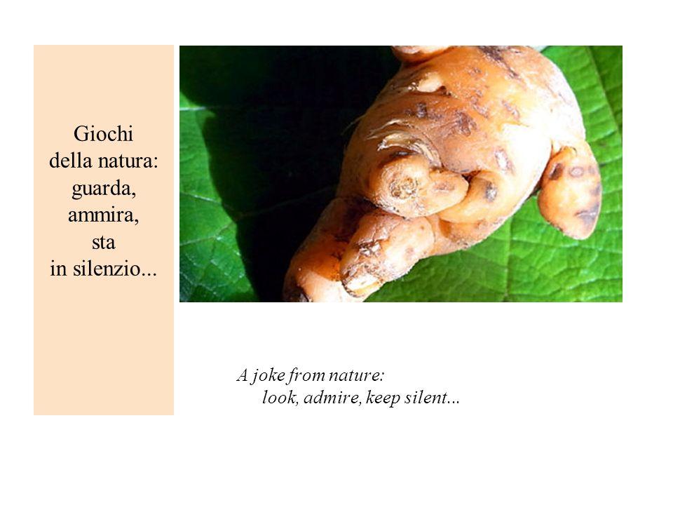 Giochi della natura: guarda, ammira, sta in silenzio... A joke from nature: look, admire, keep silent...