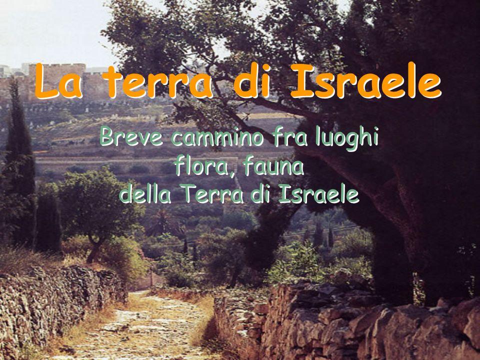 La terra di Israele Breve cammino fra luoghi flora, fauna della Terra di Israele La terra di Israele Breve cammino fra luoghi flora, fauna della Terra
