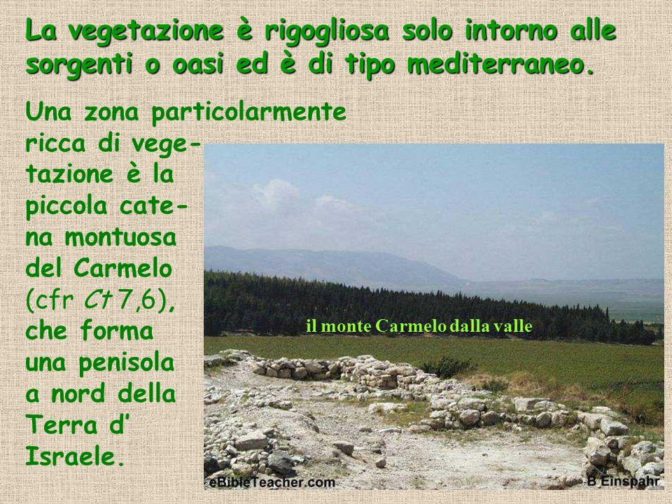 La vegetazione è rigogliosa solo intorno alle sorgenti o oasi ed è di tipo mediterraneo. Una zona particolarmente ricca di vege- tazione è la piccola
