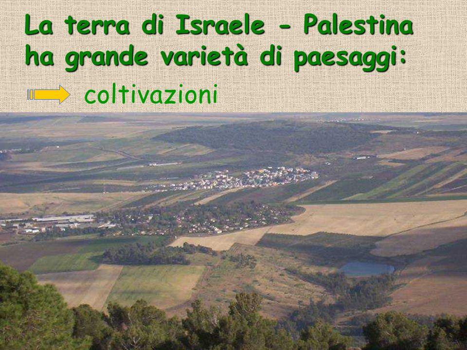 La terra di Israele - Palestina ha grande varietà di paesaggi: coltivazioni