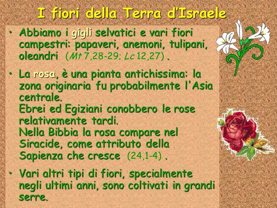 I fiori della Terra dIsraele Abbiamo i gigli selvatici e vari fiori campestri: papaveri, anemoni, tulipani, oleandri.Abbiamo i gigli selvatici e vari fiori campestri: papaveri, anemoni, tulipani, oleandri (Mt 7,28-29; Lc 12,27).