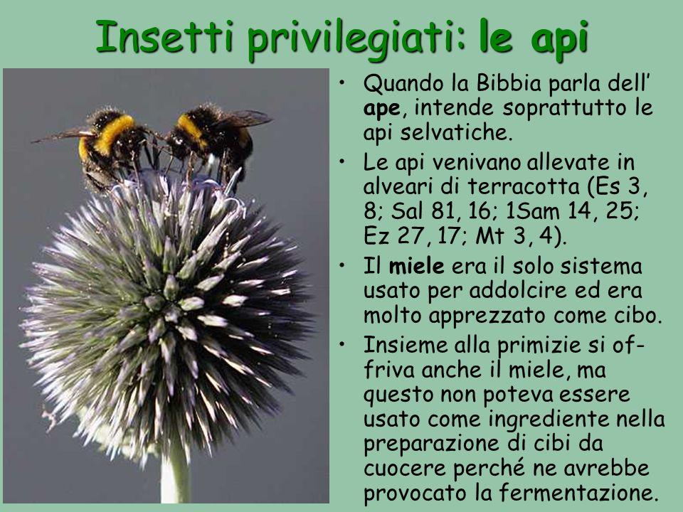 Insetti privilegiati: le api Quando la Bibbia parla dell ape, intende soprattutto le api selvatiche. Le api venivano allevate in alveari di terracotta