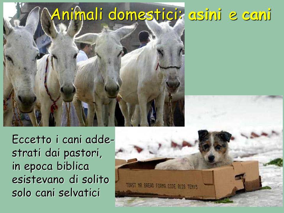 Animali domestici: asini e cani Eccetto i cani adde- strati dai pastori, in epoca biblica esistevano di solito solo cani selvatici