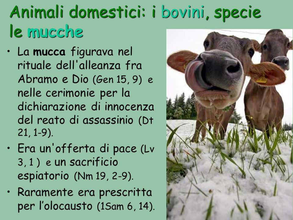 Animali domestici: i bovini, specie le mucche La mucca figurava nel rituale dell alleanza fra Abramo e Dio (Gen 15, 9) e nelle cerimonie per la dichiarazione di innocenza del reato di assassinio (Dt 21, 1-9).