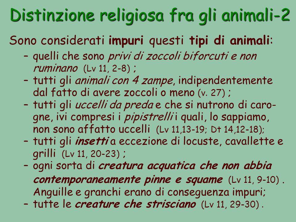 Distinzione religiosa fra gli animali-2 Sono considerati impuri questi tipi di animali: –quelli che sono privi di zoccoli biforcuti e non ruminano (Lv