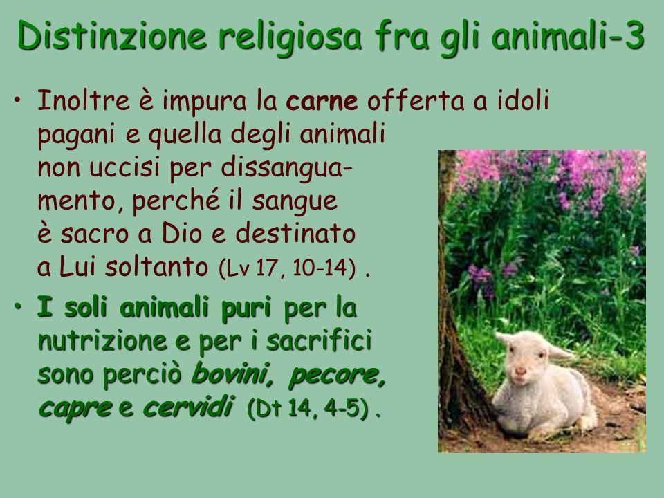 Distinzione religiosa fra gli animali-3 Inoltre è impura la carne offerta a idoli pagani e quella degli animali non uccisi per dissangua- mento, perché il sangue è sacro a Dio e destinato a Lui soltanto (Lv 17, 10-14).