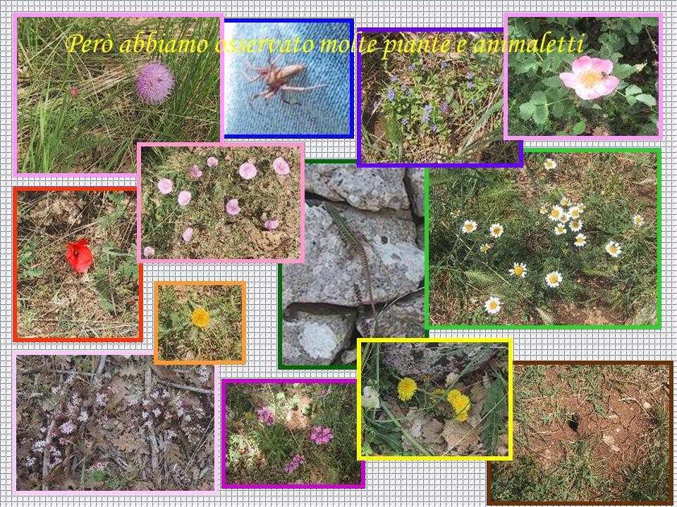 Però abbiamo osservato molte piante e animaletti