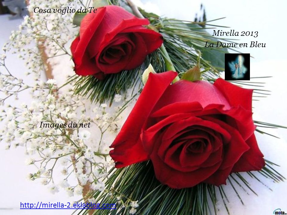 Rose Rosse per te ho comprato stasera E il tuo cuore lo sa