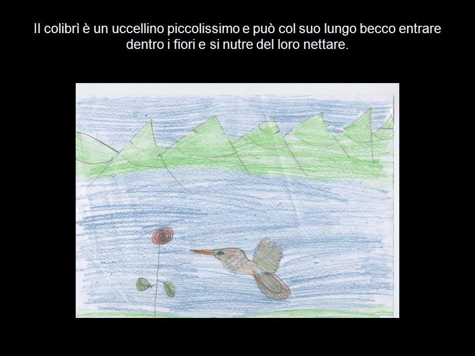 Il colibrì vola veloce, veloce come un missile quando succhia il polline.