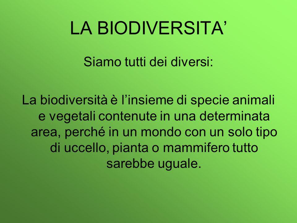 LA BIODIVERSITA Siamo tutti dei diversi: La biodiversità è linsieme di specie animali e vegetali contenute in una determinata area, perché in un mondo