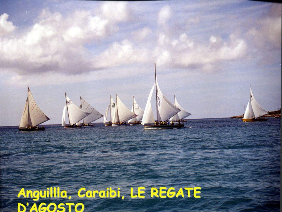 Anguillla, Caraibi, LE REGATE DAGOSTO