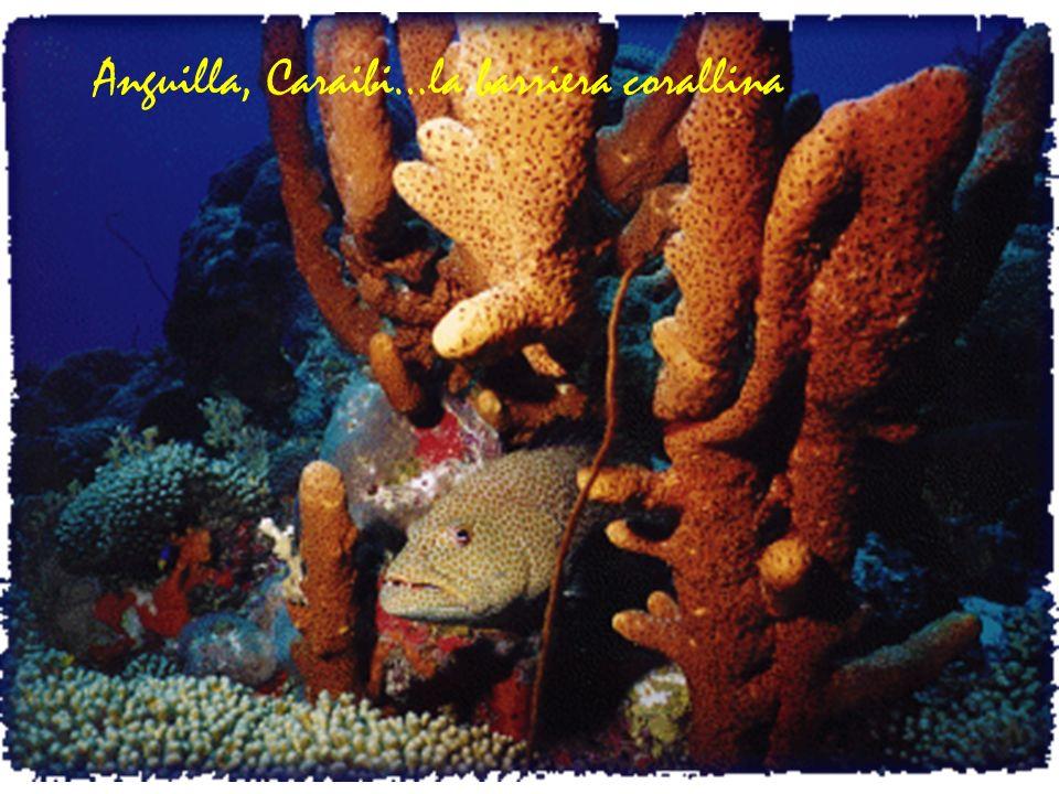 Anguilla, Caraibi…la barriera corallina