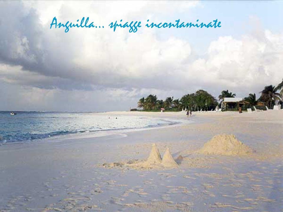 Anguilla… spiagge incontaminate
