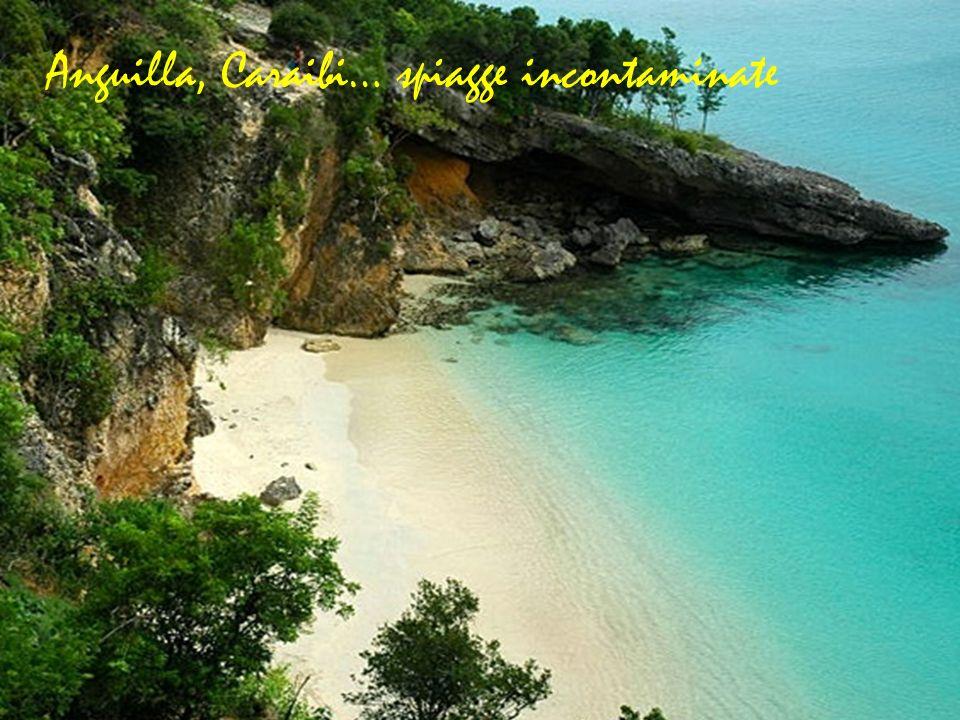 Anguilla, Caraibi… spiagge incontaminate