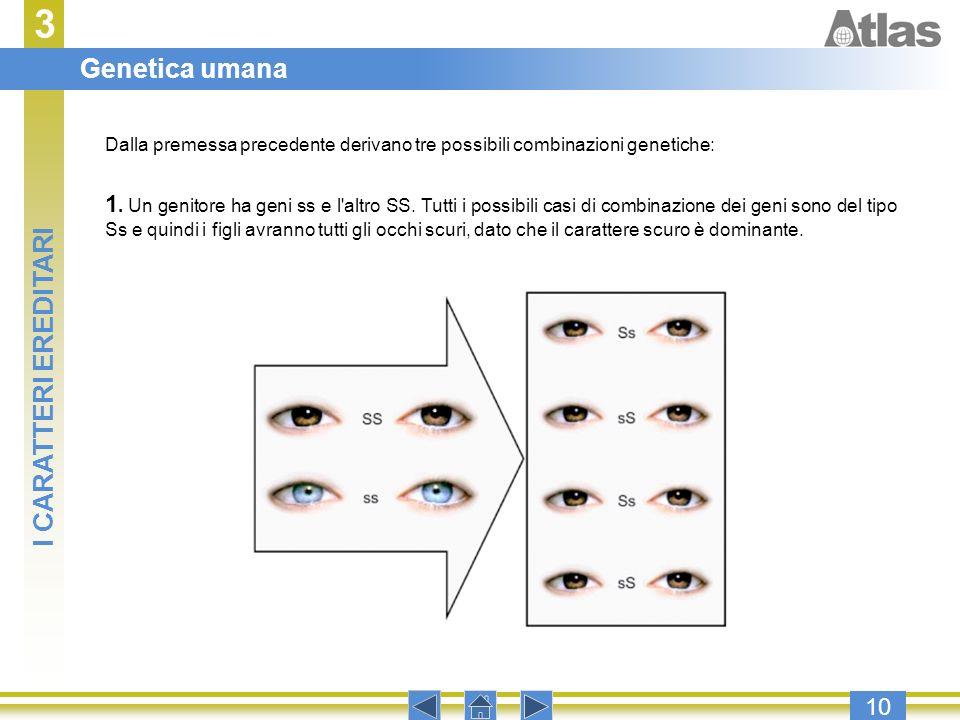 3 10 Dalla premessa precedente derivano tre possibili combinazioni genetiche: 1. Un genitore ha geni ss e l'altro SS. Tutti i possibili casi di combin