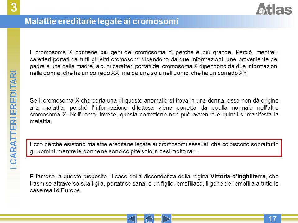 3 17 Il cromosoma X contiene più geni del cromosoma Y, perché è più grande. Perciò, mentre i caratteri portati da tutti gli altri cromosomi dipendono