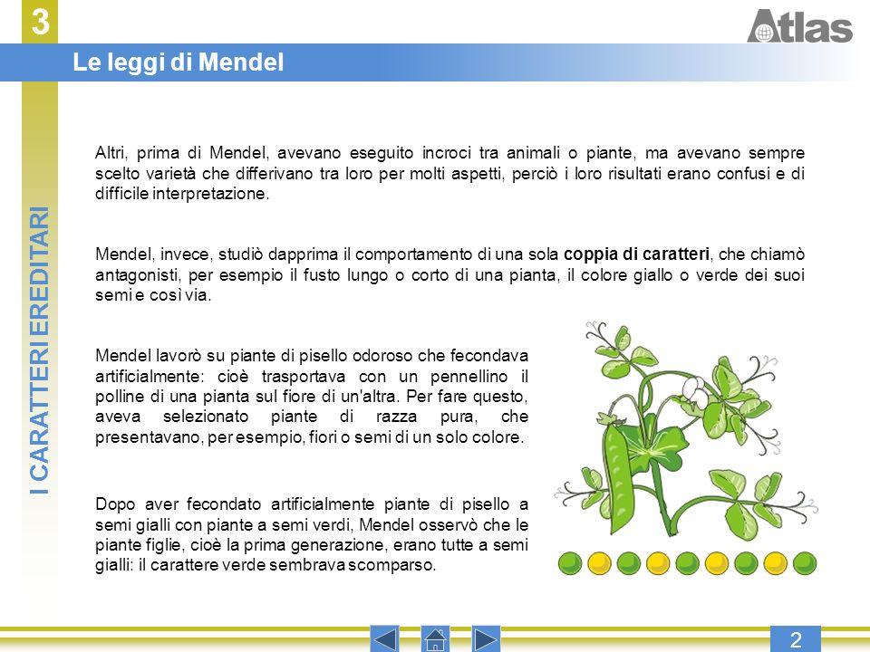 3 2 Altri, prima di Mendel, avevano eseguito incroci tra animali o piante, ma avevano sempre scelto varietà che differivano tra loro per molti aspetti