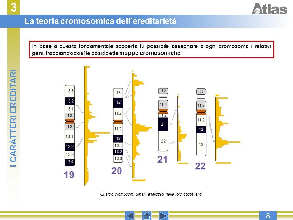 3 8 In base a questa fondamentale scoperta fu possibile assegnare a ogni cromosoma i relativi geni, tracciando così le cosiddette mappe cromosomiche.