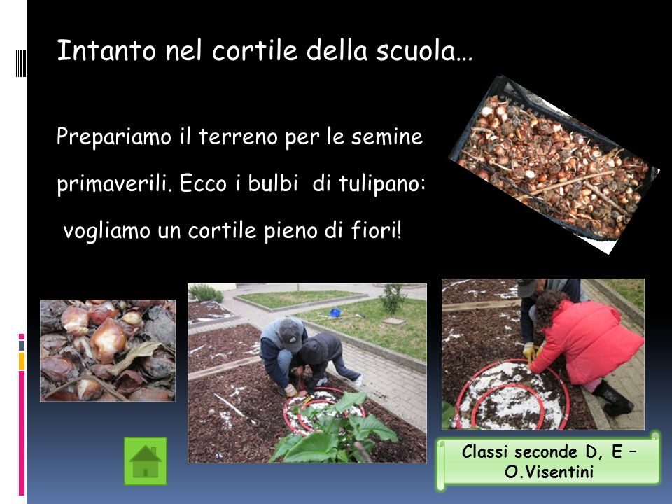 Intanto nel cortile della scuola… Prepariamo il terreno per le semine primaverili. Ecco i bulbi di tulipano: vogliamo un cortile pieno di fiori! Class