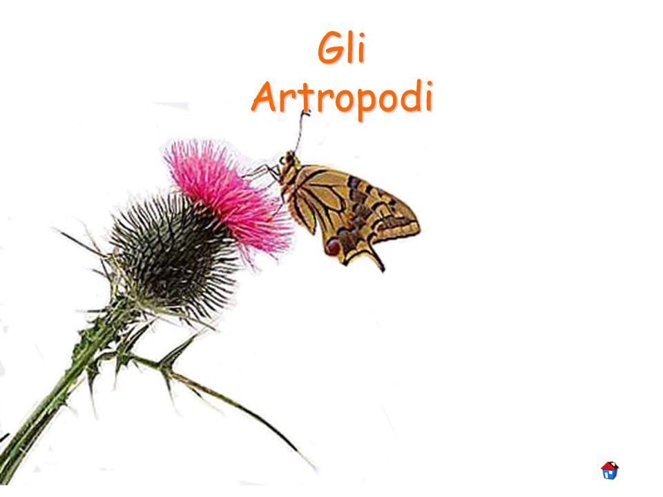 Artropodi Gli Artropodi sono animali invertebrati provvisti di uno scheletro esterno, (esoscheletro), contenente chitina (una sostanza organica azotata, talvolta impregnata di sali minerali e sostanze coloranti) e di zampe articolate.