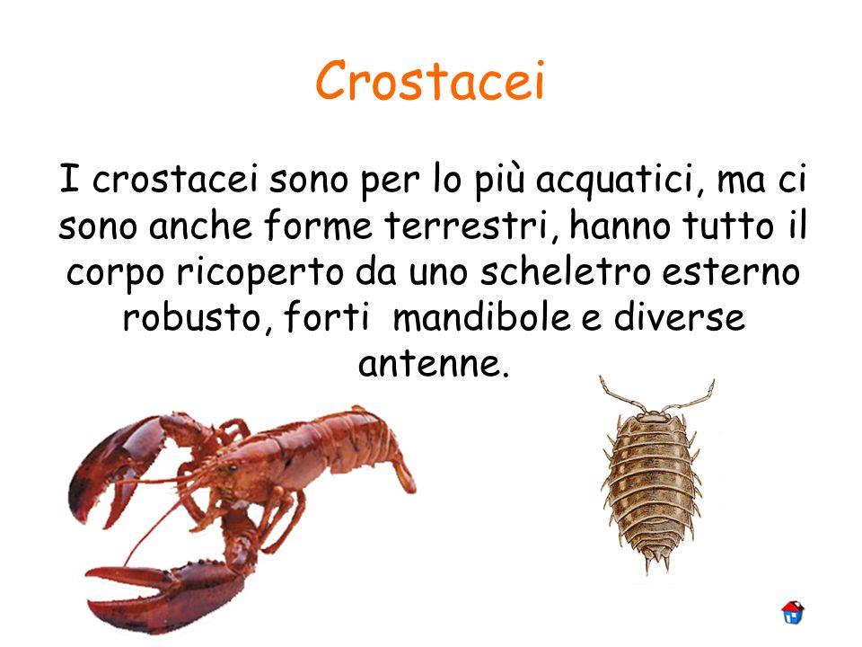 Crostacei I crostacei sono per lo più acquatici, ma ci sono anche forme terrestri, hanno tutto il corpo ricoperto da uno scheletro esterno robusto, fo