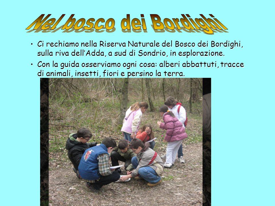 Ci rechiamo nella Riserva Naturale del Bosco dei Bordighi, sulla riva dellAdda, a sud di Sondrio, in esplorazione.Ci rechiamo nella Riserva Naturale d
