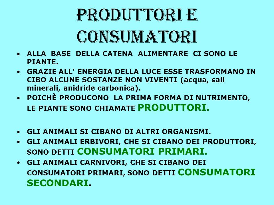 Per esserci equilibrio i produttori devono essere più numerosi dei consumatori primari, che devono essere più numerosi dei secondari e così via, come nella PIRAMIDE qui rappresentata CONSUMATORI PRIMARI CONSUMATORI SECONDARI PRODUTTORI CONSUMATORI TERZIARI