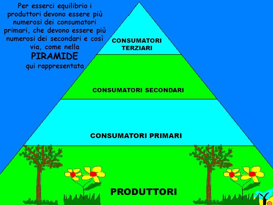 Per esserci equilibrio i produttori devono essere più numerosi dei consumatori primari, che devono essere più numerosi dei secondari e così via, come