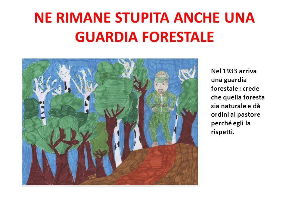 NE RIMANE STUPITA ANCHE UNA GUARDIA FORESTALE Nel 1933 arriva una guardia forestale : crede che quella foresta sia naturale e dà ordini al pastore per