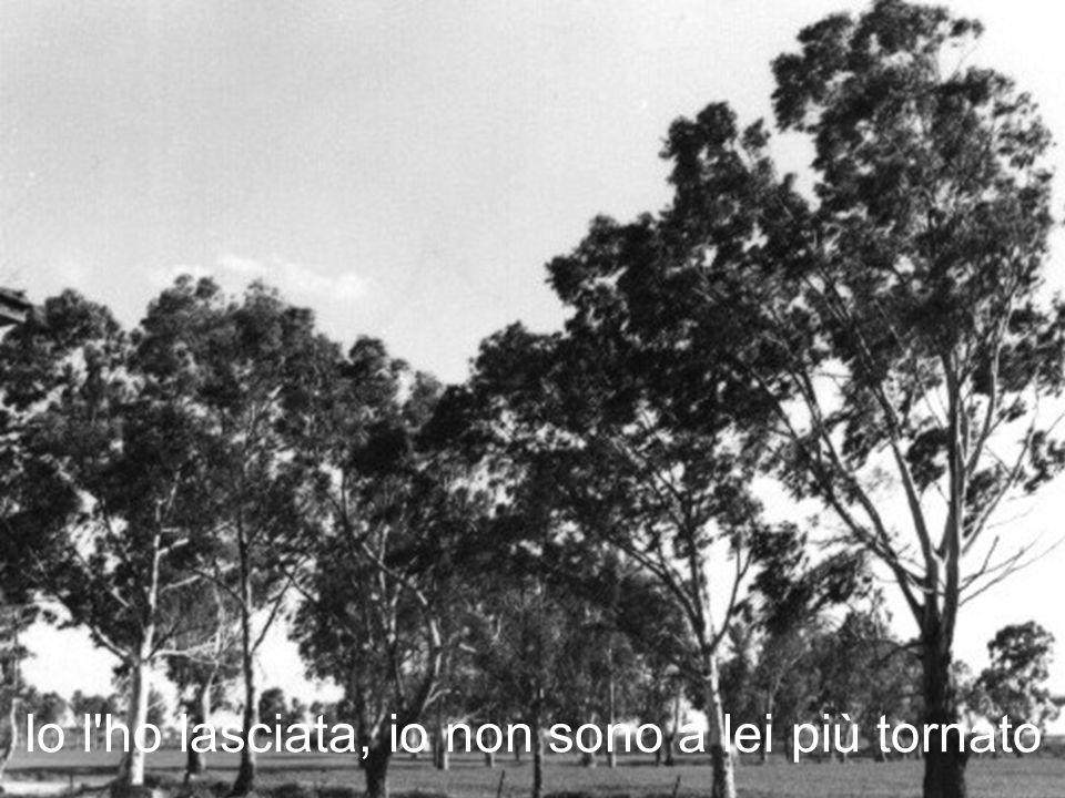 La poesia Non dire che la mia casa è triste è tratta da La miniera di Claudio Damiani, Editore Fazi, 1997.