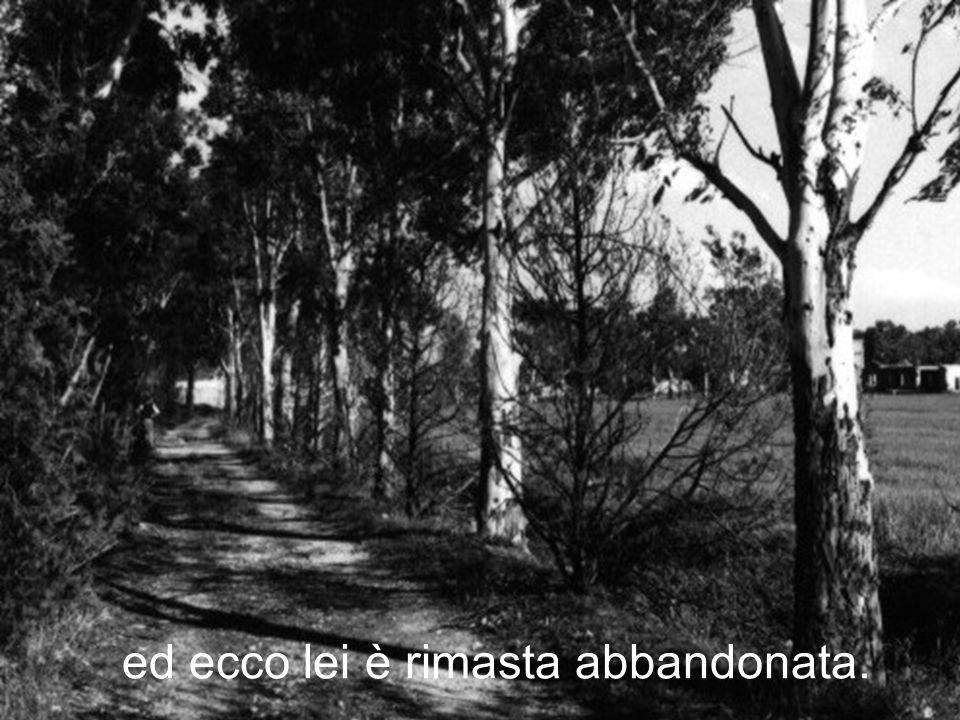 Ma gli alberi intorno a lei sono cresciuti,