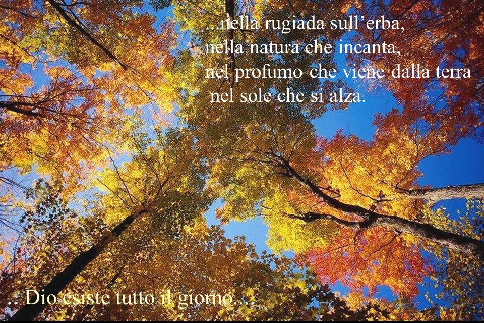 ...nella rugiada sullerba, nella natura che incanta, nel profumo che viene dalla terra nel sole che si alza... Dio esiste tutto il giorno....