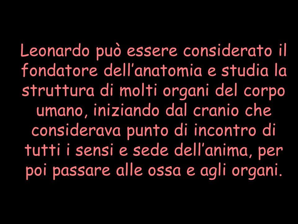 Leonardo può essere considerato il fondatore dellanatomia e studia la struttura di molti organi del corpo umano, iniziando dal cranio che considerava