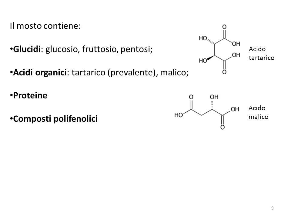 Il mosto contiene: Glucidi: glucosio, fruttosio, pentosi; Acidi organici: tartarico (prevalente), malico; Proteine Composti polifenolici Acido tartari