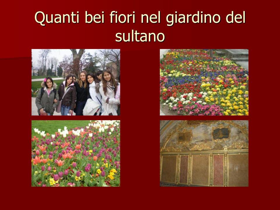 Quanti bei fiori nel giardino del sultano