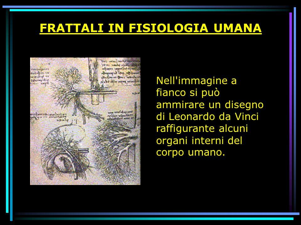 FRATTALI IN FISIOLOGIA UMANA Nell'immagine a fianco si può ammirare un disegno di Leonardo da Vinci raffigurante alcuni organi interni del corpo umano
