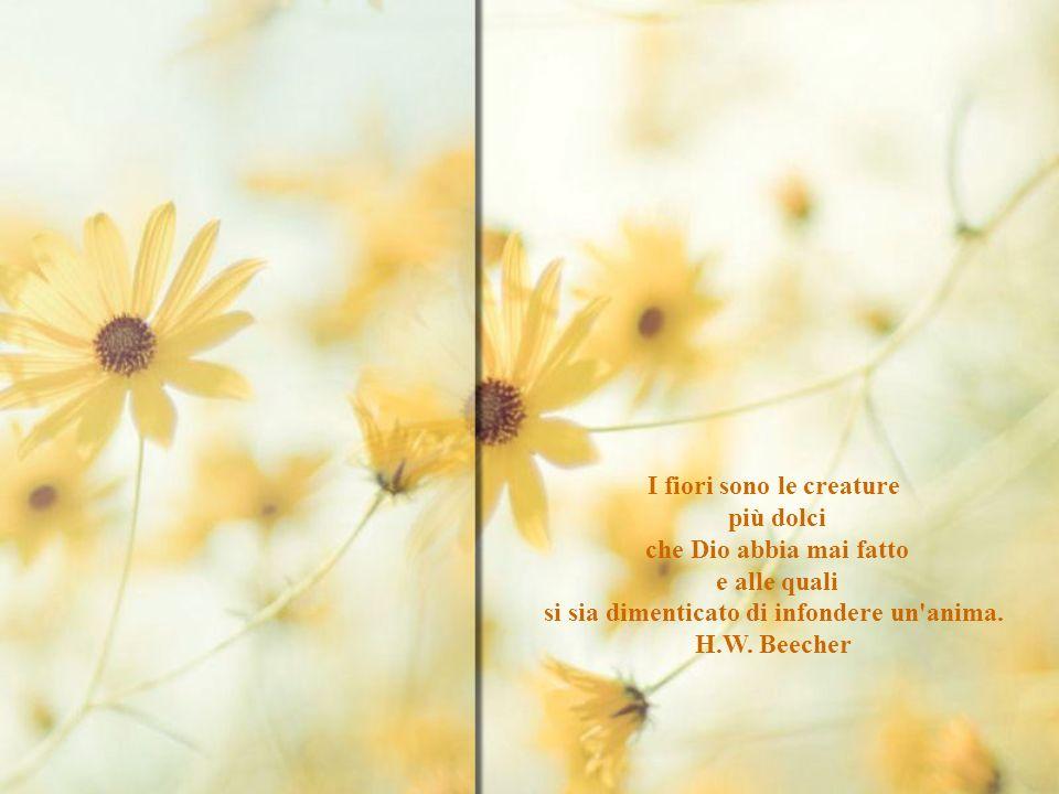 I fiori sono le creature più dolci che Dio abbia mai fatto e alle quali si sia dimenticato di infondere un anima.