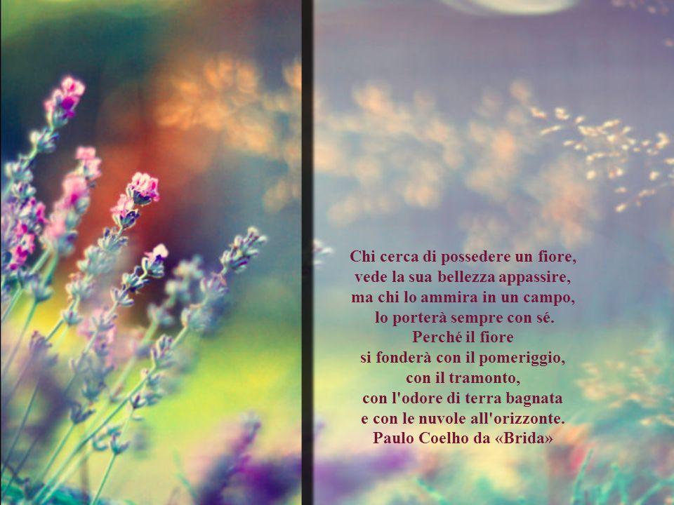 Chi cerca di possedere un fiore, vede la sua bellezza appassire, ma chi lo ammira in un campo, lo porterà sempre con sé.