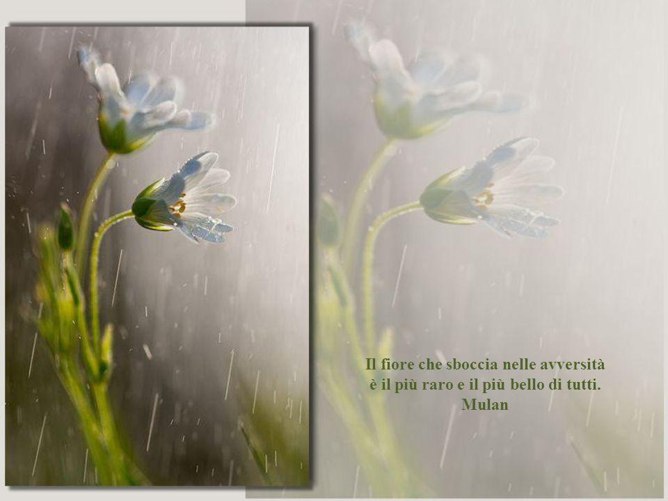 Il fiore che sboccia nelle avversità è il più raro e il più bello di tutti. Mulan