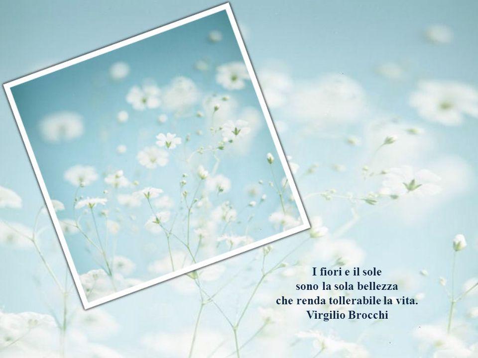 I fiori e il sole sono la sola bellezza che renda tollerabile la vita. Virgilio Brocchi