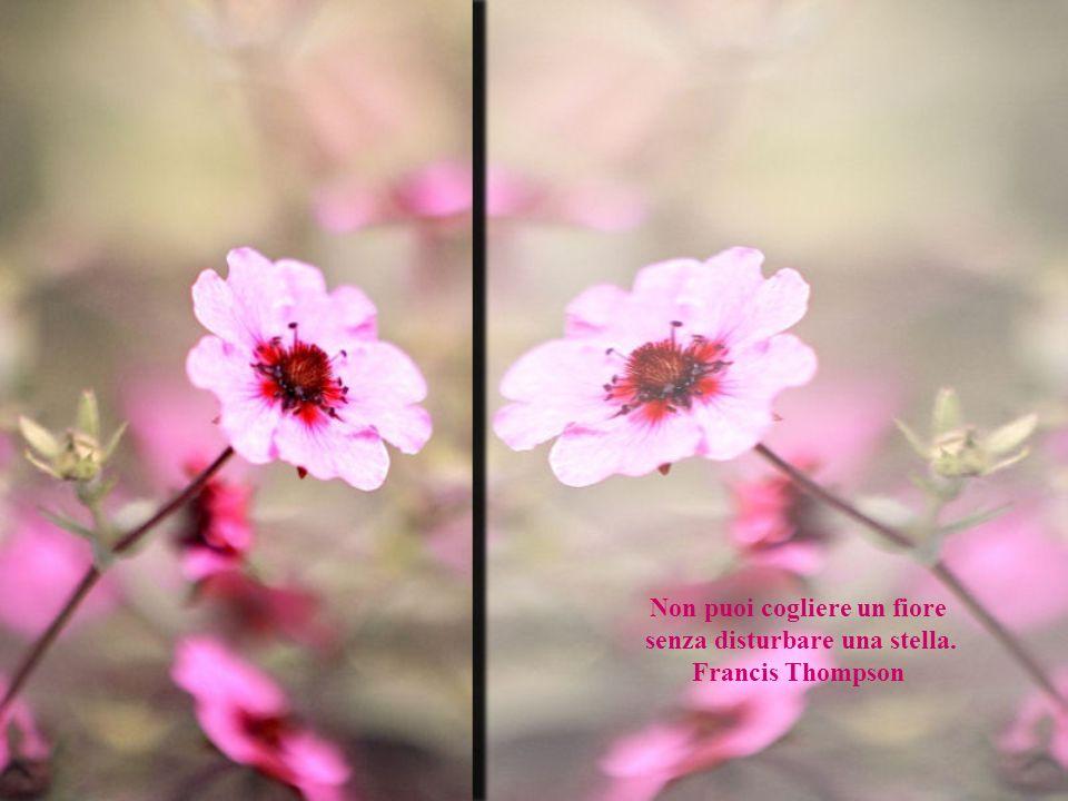 Non puoi cogliere un fiore senza disturbare una stella. Francis Thompson