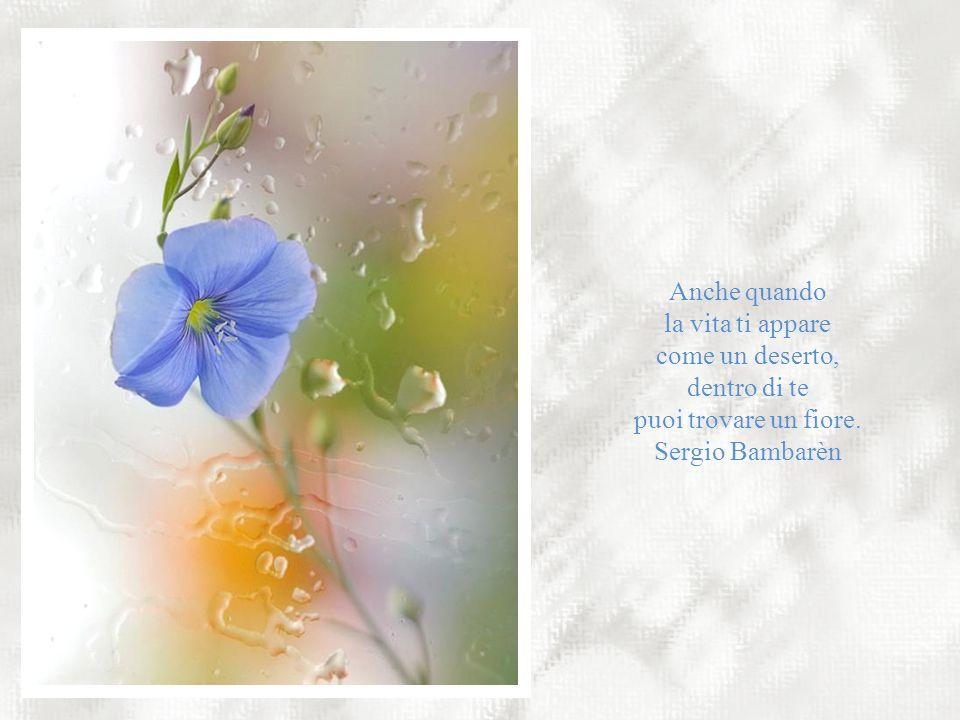 Dovremmo essere come i fiori. Ogni mattina sbocciare e profumare la vita degli altri. Antonio Curnetta