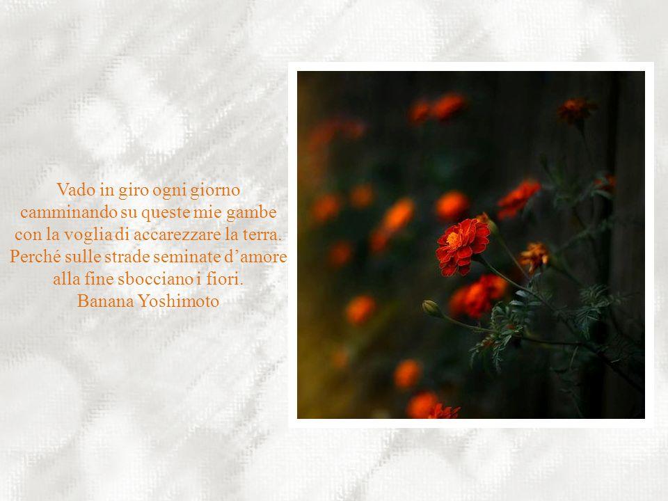 Il corpo è come un giardino, e la mente è il suo giardiniere. Sta a noi decidere se in esso piantarvi orchidee o lattuga. William Shakespeare