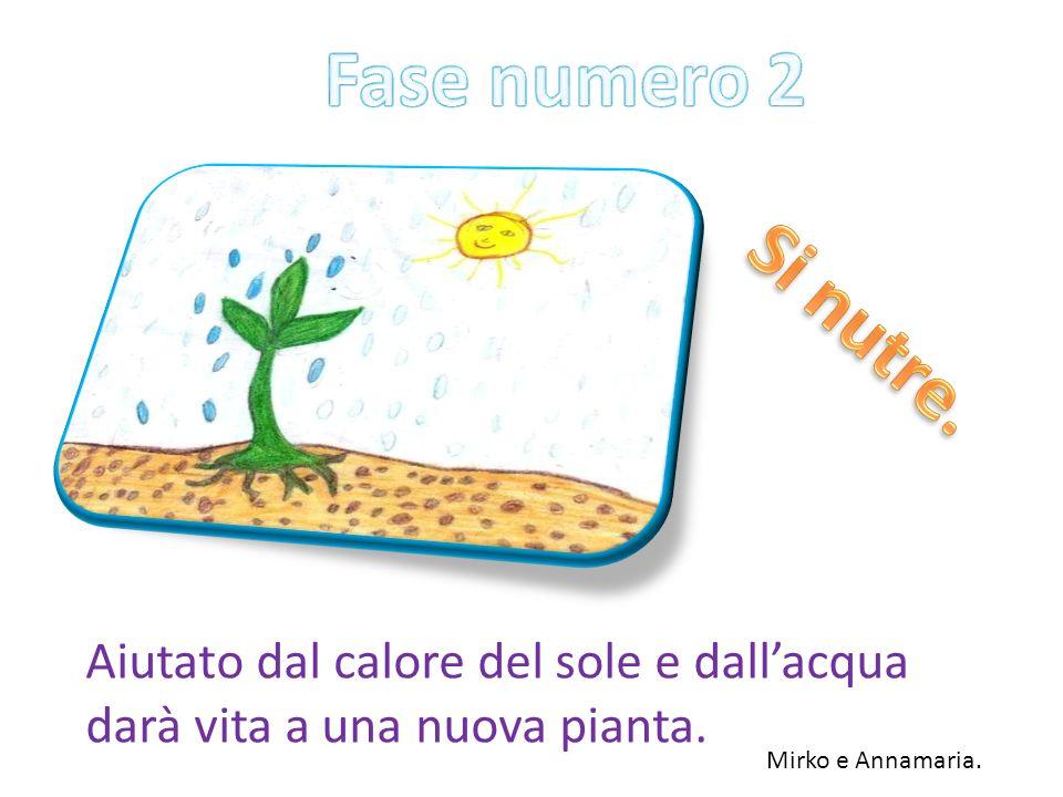 Aiutato dal calore del sole e dallacqua darà vita a una nuova pianta. Mirko e Annamaria.