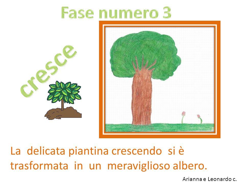 La delicata piantina crescendo si è trasformata in un meraviglioso albero. Arianna e Leonardo c.